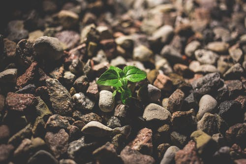 20 growth mindset quotes and explanations